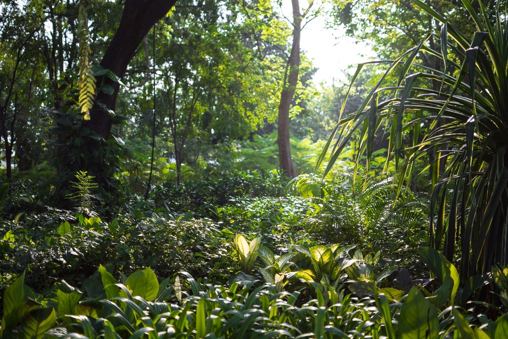 rainforest in sun